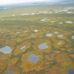 Васюганские болота, НСО, Городской округ Бердск